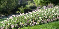 Tulips: taken at Buttes-Chaumont Park in April 2011