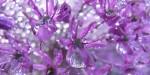 Idy blogowe - kwiecień 2013 [http://www.sxc.hu/photo/1013709]
