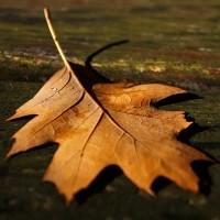 Idy blogowe - październik 2013 | http://www.sxc.hu/photo/1405888