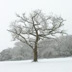 Snow | http://www.sxc.hu/photo/705201