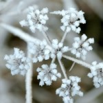 Frost | http://www.sxc.hu/photo/1147248